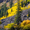 Aspens and firs  Twin Lakes  Mammoth ca