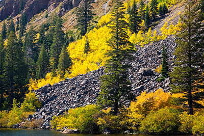 Golden Aspens, Twin Lakes. Mammoth Lakes Ca.