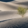 Resilience in Eureka Dunes - Death Valley, CA