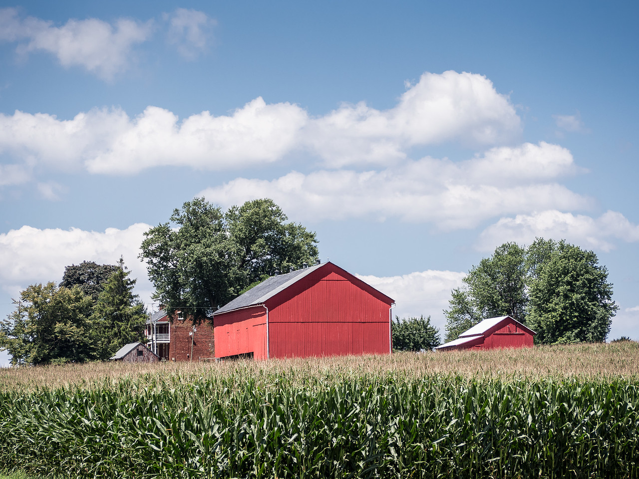 Red Barn & Cornfield