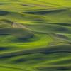 Palouse Waves