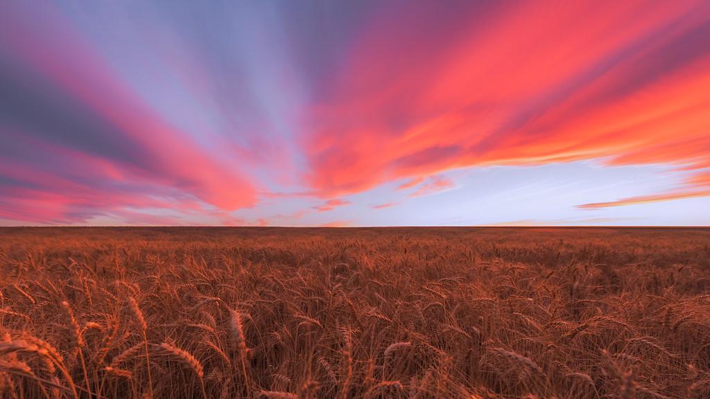 Bountiful Plains