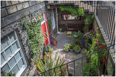 Basement garden, Heriot Row (3)