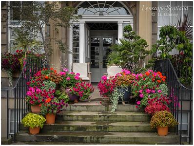 Doorstep garden, Henderson Row (1)