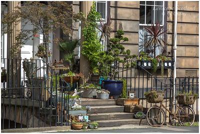 Doorstep garden, Henderson Row (3)