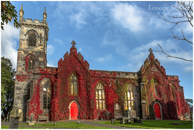 Liberton Kirk covered in red vine (1)