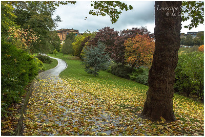 Autumn in East Princes Street Gardens (1)