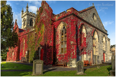 Liberton Kirk covered in red vine (4)