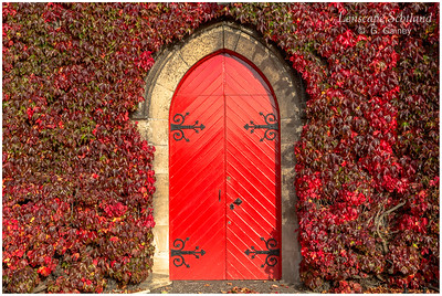Liberton Kirk covered in red vine (3)