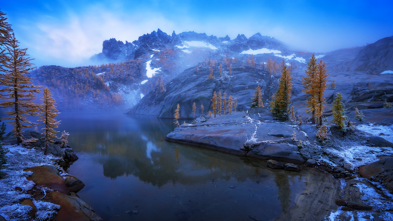 Larches in the Enchanted Mist