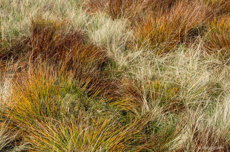 Sedge grasses on the moor