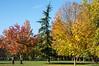 Autumn colour in the park at Nancy
