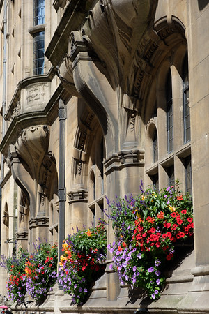 Window boxes in Oxford