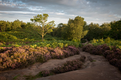 Thurstaston Common
