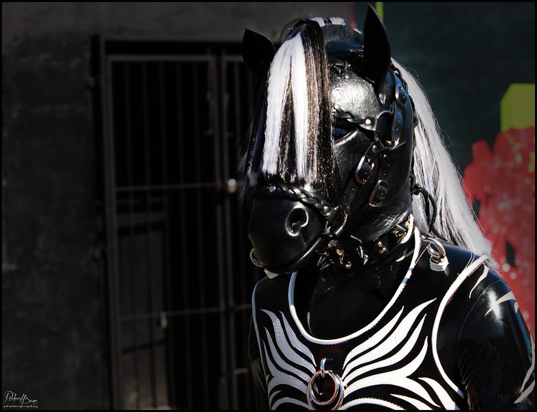 """Be The Zebra"""