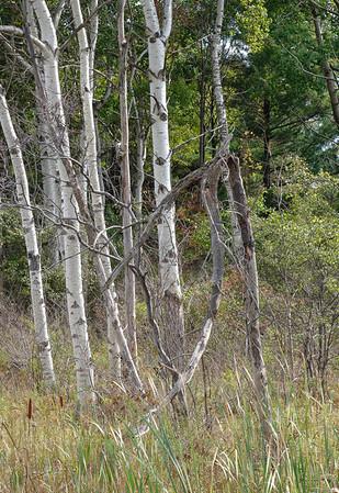 Fall Woods,Ithaca II
