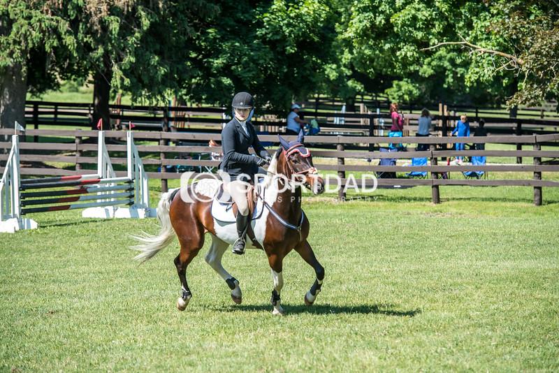 SPORTDAD_equestrian_0737