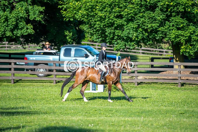 SPORTDAD_equestrian_7340