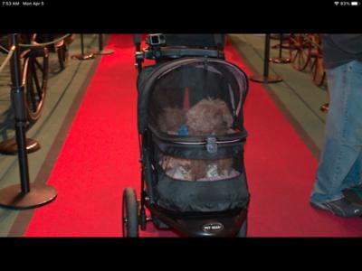 Dog Stroller by Pet Gear
