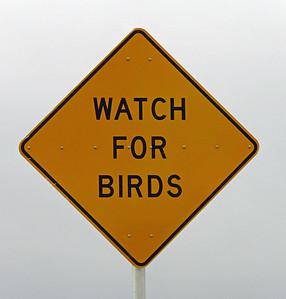 00-Watch for Birds