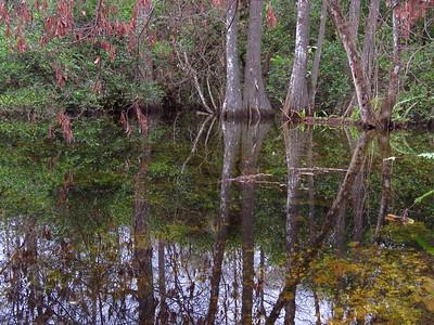 Big Cypress NP, Everglades City, FL (20)