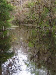 Big Cypress NP, Everglades City, FL (21)