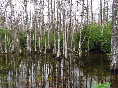 Big Cypress NP, Everglades City, FL (23)