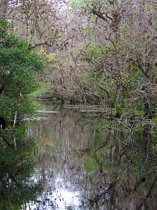 Big Cypress NP, Everglades City, FL (22)