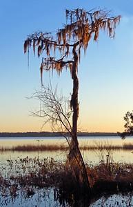 Ocean Pond Cpgr , Sanderson, FL (6)