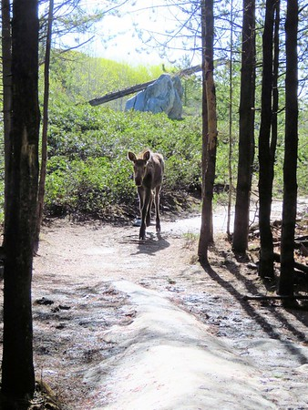 Taggart Lake Trail,  GTNP, WY (14)