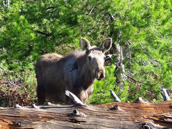 Taggart Lake Trail,  GTNP, WY (10)