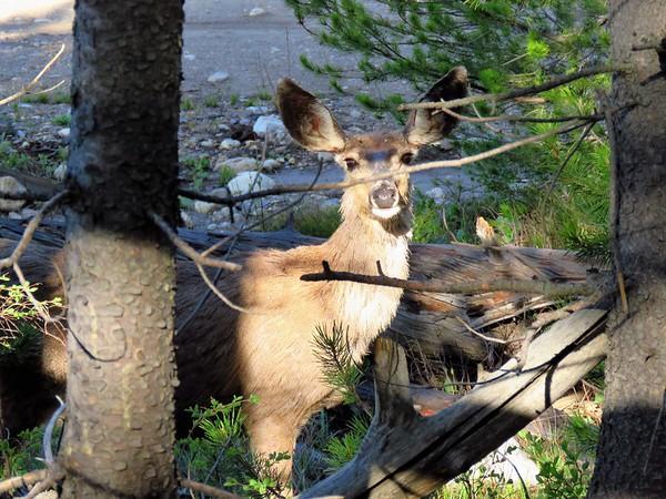 Taggart Lake Trail,  GTNP, WY (4)