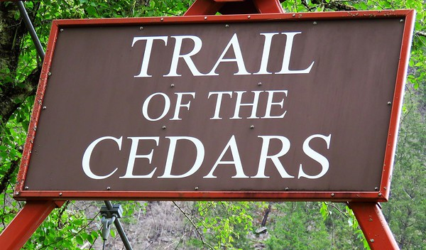 Trail of the Cedars, Newhalem Creek, WA (1)