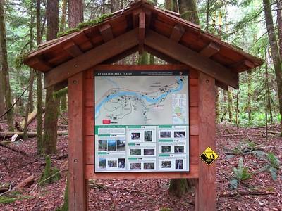 Trail of the Cedars, Newhalem Creek, WA (4)