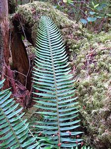 Trail of the Cedars, Newhalem Creek, WA (12)