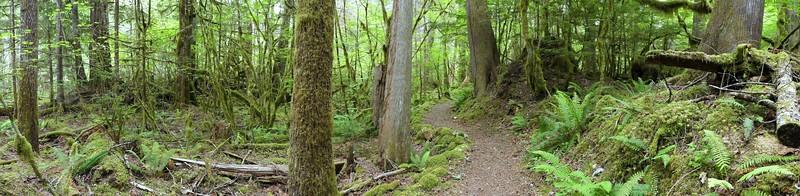 Trail of the Cedars, Newhalem Creek, WA (14)