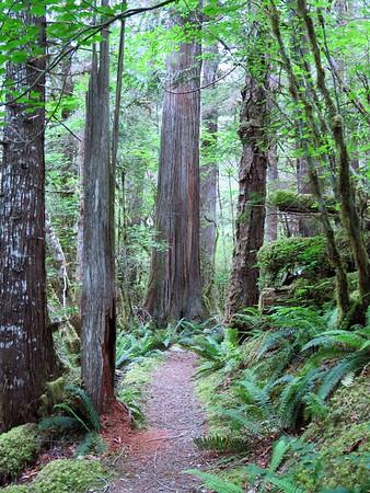 Trail of the Cedars, Newhalem Creek, WA (10)