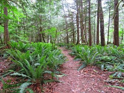 Trail of the Cedars, Newhalem Creek, WA (17)