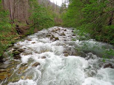 Trail of the Cedars, Newhalem Creek, WA (15)