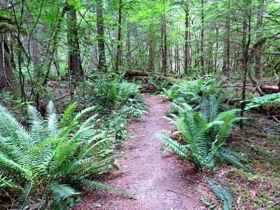 Trail of the Cedars, Newhalem Creek, WA (6)