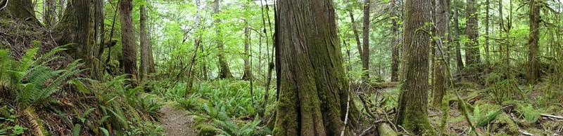 Trail of the Cedars, Newhalem Creek, WA (13)