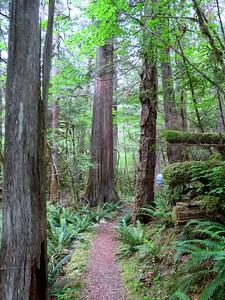 Trail of the Cedars, Newhalem Creek, WA (11)