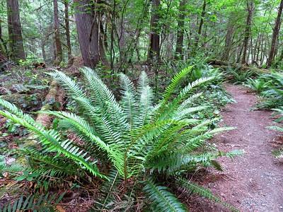 Trail of the Cedars, Newhalem Creek, WA (7)