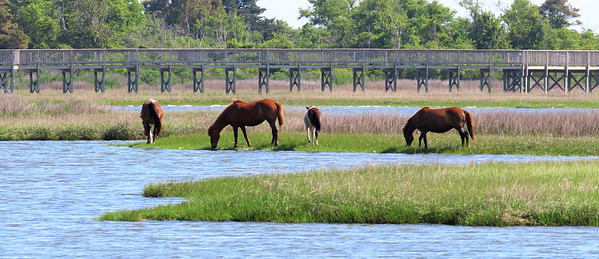 Assateague Nat  Seashore, NC (1)