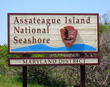 Assateague I N S , MD (5)