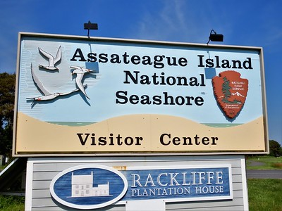 Assateague I N S , MD (6)