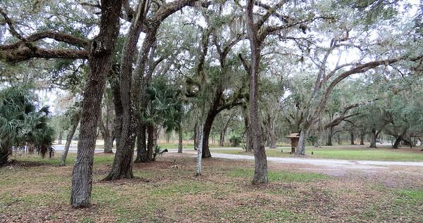 Moss Park, Orlando, FL (7)