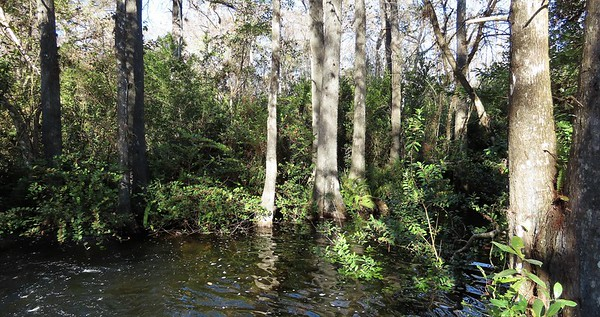 Big Cypress Nat  Preserve, FL (9)