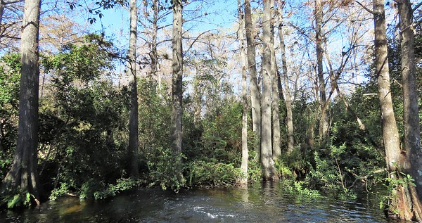 Big Cypress Nat  Preserve, FL (10)