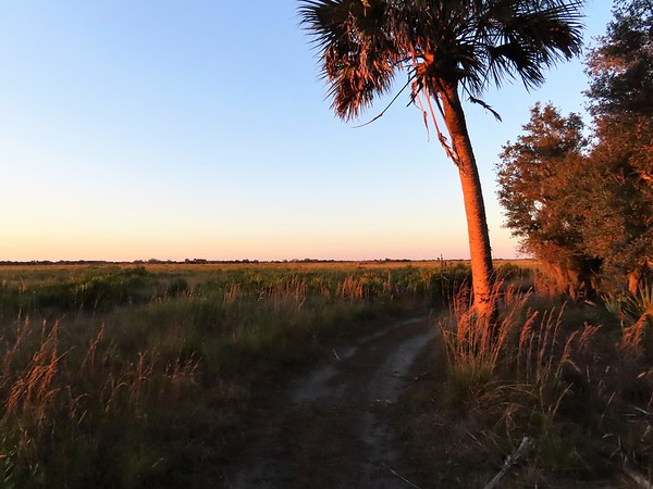 Kissimmee Prairie Preserve SP, FL (16)